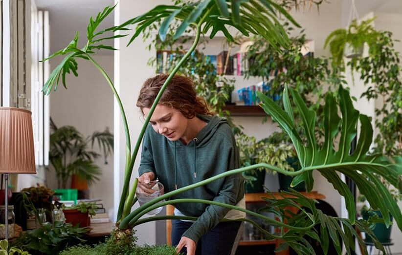 Benefits of Plants 10